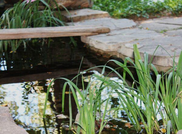 Waterpartij. Vijver. Waterplanten